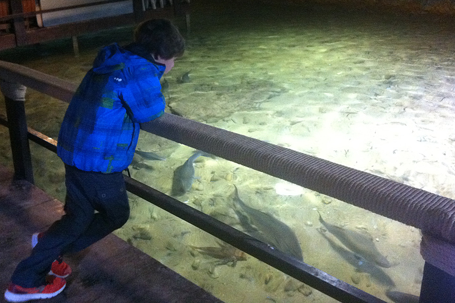 U aquarium cap blanc ibiza